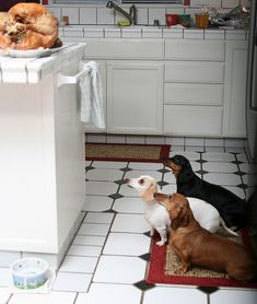 """What we could do to that turkey!"" #dogs #pets #Dachshunds Facebook.com/sodoggonefunny"