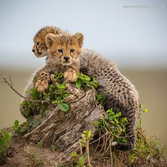 Little Boys - Masai Mara -Kenya