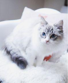 marionromain: Un an avec mon petit chat