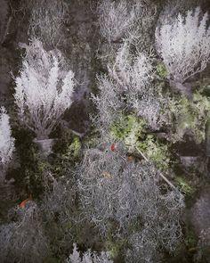 "21 Me gusta, 1 comentarios - Maria Antolini (@meri_antoniette) en Instagram: ""#flashlight #plant #wall #wild"""