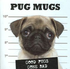 """An endearing sequence of """"mug shots"""" featuring reprobate pugs with particularly innocent-looking soulful eyes documents how each depicted pooch has been caught committing acts of theft, bribery or van"""