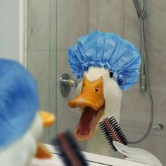Aflac duck. Singing in the shower
