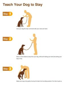Dog Obedience Training – Dog Training Tips Online – And Free! Puppy Training Tips, Training Your Dog, Potty Training, Crate Training, Training Collar, Obedience Training For Dogs, Clicker Training Puppy, Therapy Dog Training, Service Dog Training