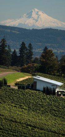 Dundee, Pinot Noir, Wineries, Northern California, Pacific Northwest, British Columbia, A Boutique, Mount Rainier, Portland
