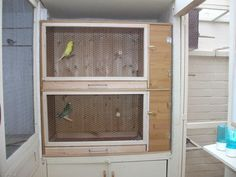 Why an Aviary Bird Cage is a Wonderful Choice : Homemade Bird Aviaries And Flight Cages. Homemade bird aviaries and flight cages. Cockatiel, Budgies, Flight Cage, Feathered Dinosaurs, Pet Bird Cage, Bird Aviary, Dog Furniture, Parakeet, Pet Shop