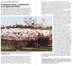 Nota sobre la reproducción del flamenco Común en la Laguna de Pétrola (Chinchilla de Montearagón-Pétrola), durante el año 2012. Aparecida en el número 319 de la Revista QUERCUS, páginas 46 y 47.
