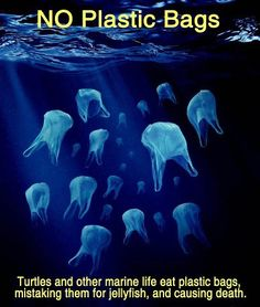 I love bold quotes/ pictures like this. Showing students how similar bags and jelly fish look in the water is a great tool to aid in their higher level thinking and provoke great classroom discussion as to how we can help our environment, by being more mindful of our waste.