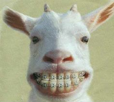 Even goats want a nice white smile, and straight teeth I don't know why I find this so funny!