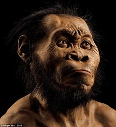 New member of the family: The finding has provided a challenge for the scientists who have been tasked with the bones' analysis, Dr Stronger added: 'Some of Homo naledi's features, such as its hands, wrist and feet, are very similar to those of modern humans' (reconstruction of new species Homo naledi pictured)