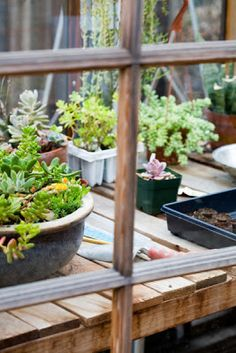 Garden Bliss: Propagating Succulents