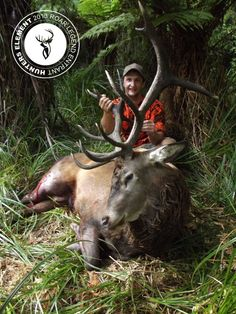 Lance Mansell with his 14 point monster that was taken from the Gisborne bush after an exciting stalk.