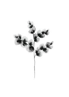 Cotton plant, poster