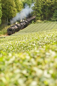 Green Tea with Oigawa Railway, Shizuoka, Japan Japan Landscape, Green Landscape, Japanese Countryside, Train Tour, Shizuoka, Win A Trip, Trains, Japan Photo, Tokyo