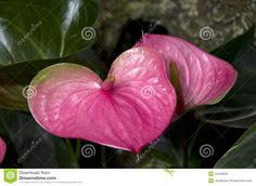 Subtropical Garden Flowers Plants - Download From Over 53 Million High Quality Stock Photos, Images, Vectors. Sign up for FREE today. Image: 44160829