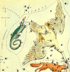 "Cygnus. It's one of the constellations whose shape is a plausible representation of what it represents. As shown in 19th century ""Urania's Mirror,"" it's a swan with outstretched wings. ©Mona Evans, ""Cygnus the Swan"" http://www.bellaonline.com/articles/art52752.asp"