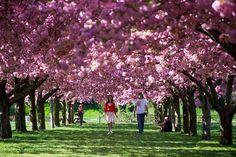 Jardín Botánico de Brooklyn - Nueva York - que visitar