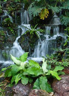 Singapore - Botanical Park