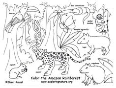 Rainforest Animals Coloring Pages Free Online Printable Coloring Pages Sheets For Kids Get The Latest Free Rainforest Animals Coloring Pages Images