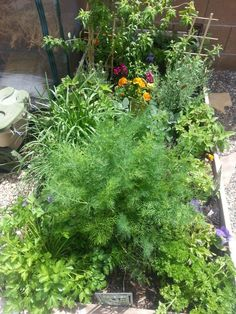 My herbs..alot of the medicinal herbs for my homemade medicines. ..katykale