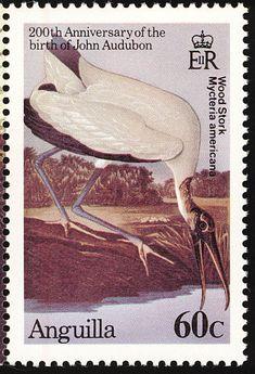 Wood Stork (Mycteria americana). 200th anniversary of the birth of John Audubon…