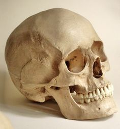 Inside Skull Diagram 2001 Honda Civic Fuse Box Actual Great Installation Of Wiring 184 Best Human Skeliton Images Skulls Anatomy Bones Rh Pinterest Com Labeled