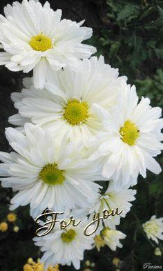 GIFS HERMOSOS: FLORES MARIPOSAS ETC ENCONTRADAS EN LA WEB Beautiful Gif, Simply Beautiful, Beautiful Flowers, Book Gif, Daisy Love, Butterfly Pictures, Dragonfly Tattoo, White Gardens, Gifs