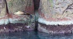 A sleepy sea lion in #Mexico's Sea of Cortez. #travel #adventure