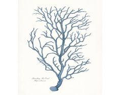 Coastal Decor Branch Sea Coral Nautical Art Print 8x10 French Blue