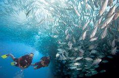 Abu Dhabi Scuba Diving