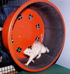 DIY Ferret Exercise Wheel - because exercise is healthy! PetDIYs.com