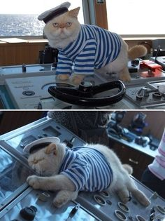 "cute-overload:  Meet the captain cat - a resident of a Russian heavy atomic battlecruiser ""Pyotr Velikij"" http://cute-overload.tumblr.com"
