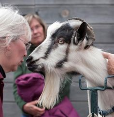 #goatvet likes this photo from a blog about keeping bucks