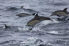 New Zealand - Paihia - Bay of Islands