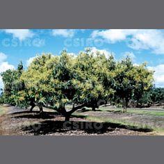 what a pretty tree. avocado