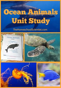 Ocean Animals Unit Study | #pollution #motherearth #kidscraft #easy #kids #globalguardiann #saveocean #familygoal #plasticpollution