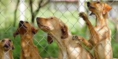 Provide Support to Sydney Dogs and Cats Home & Save from Closure
