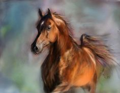 Arabian stallion Sus - digital painting with Corel Painter - based on the photo made by Ewa Imielska-Chebda with her kind permission.