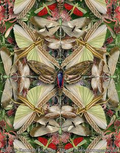 Forms of Nature #13: Insects by kenneth_rougeau, via Flickr -  Reminds me of a kaleidoscope