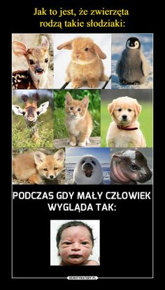 To nie jest dziecko to gówniak Wtf Funny, Funny Cute, Hilarious, Animal Memes, Funny Animals, Cute Animals, Polish Memes, Funny Mems, Best Memes