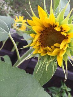 なおままさんが投稿した画像です。他のなおままさんの画像も見てませんか?|おすすめの観葉植物や花の名前、ガーデニング雑貨が見つかる!GreenSnap(グリーンスナップ)
