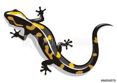 Find Salamander stock images in HD and millions of other royalty-free stock photos, illustrations and vectors in the Shutterstock collection. Gecko Tattoo, Lizard Tattoo, Les Reptiles, Reptiles And Amphibians, Tattoos Realistic, Stock Image, Black And White Drawing, Button Art, Contemporary Paintings
