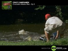 If you've ever been tempted to turn your back on a lurking crocodile, this video clip of Cameraman Lee Jackson's close encounter will explain why that's never a good idea. Not even for a second.