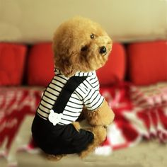 Western Style Men's Suit Puppy Costume Apparel