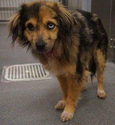 Aussie Mix, Dogs, Animals, First Aid, Pet Dogs, Animales, Animaux, Doggies, Animal