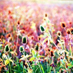 Summer by LuizaLazar.deviantart.com