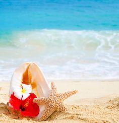 Plumeria hibiscus starfish seafish beach summer hawaii