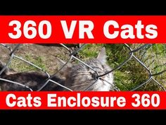 VR 360 Funny Cats - 360 VR Cats - VR 360 Cats Enclosure Outdoor - YouTube Animals And Pets, Funny Animals, Cute Animals, Funny Cat Videos, Funny Cats, Cat Behaviour, Outdoor Cat Enclosure, Youtube Cats, Right Meow