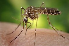 How Eating Meat and Climate Change Have Contributed to Viruses like Zika