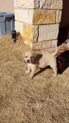 NEXT on DEATH ROW - DON´T HESITATE, THEY KILL PUPPIES TOO! NEXT on DEATH ROW - Male mix breed AVAILABLE NOW*********LOCATED AT ODESSA TEXAS ANIMAL CONTROL  https://www.facebook.com/photo.php?fbid=717753618248879&set=a.573572332667009.1073741829.248355401855372&type=3&theater