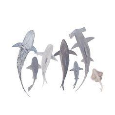 Study of Sharks, Archival Watercolor Print – Mari Orr